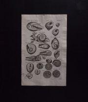 ヨンストンの図版 10  êtres marins