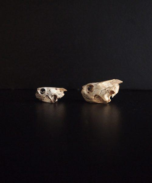 亀の頭蓋骨 2点