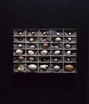 Spécimen d'œuf d'oiseau