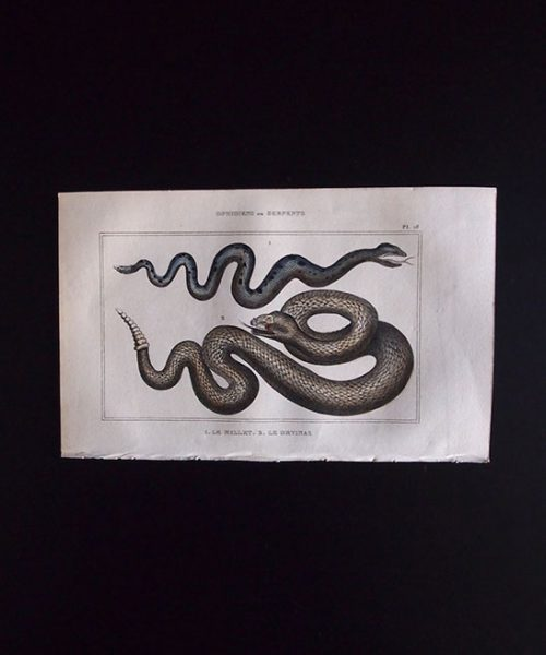蛇の図版 OPHIDIENS ou SERPENTS
