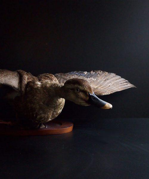 Farce au canard