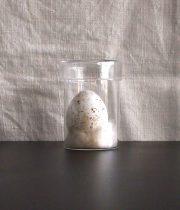 ガラス瓶入り卵の標本 A