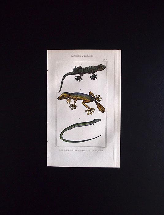 爬虫類の版画 SAURIENS ou LÉZARDS