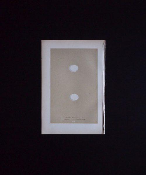 鳥の卵の図版 5