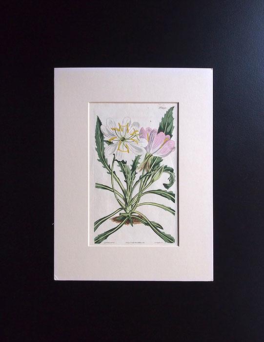 カーティスの植物図版 1