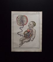 人体解剖図  Foetus et utérus