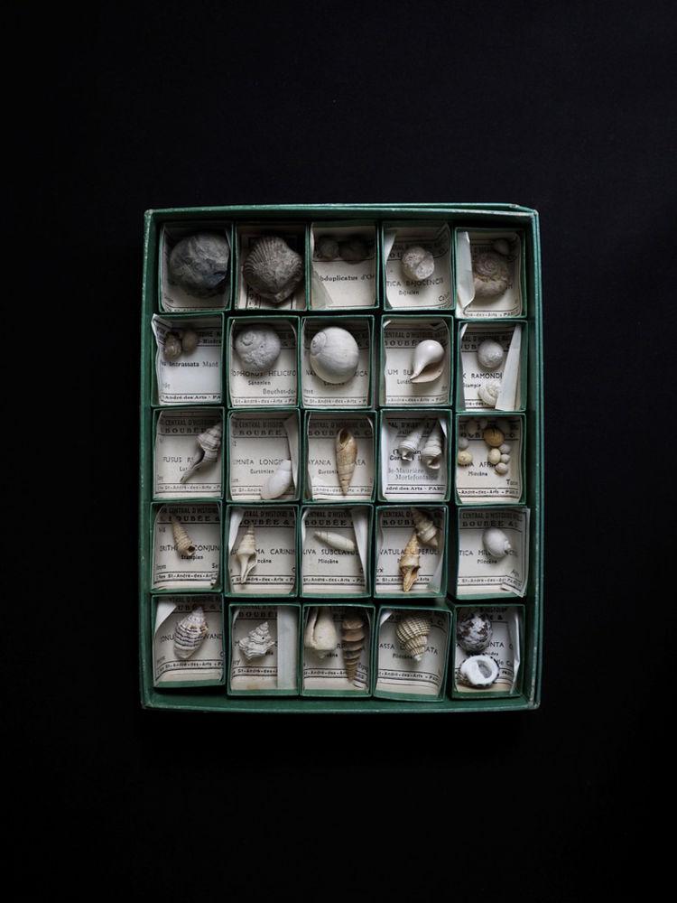 Collection de 25 GASTÉROPODES