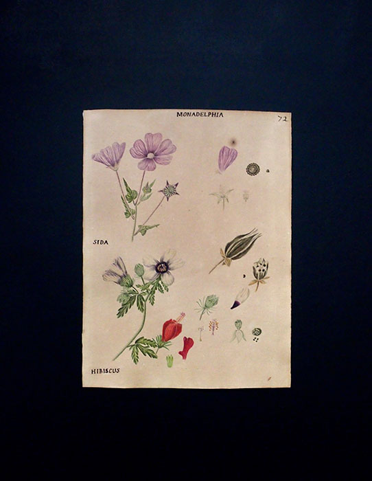 手描きの植物画 B