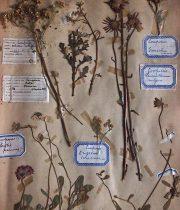 Livre de fleurs pressées 13