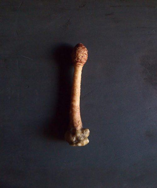 キノコの模型 53  Champignon de l'ombrelle