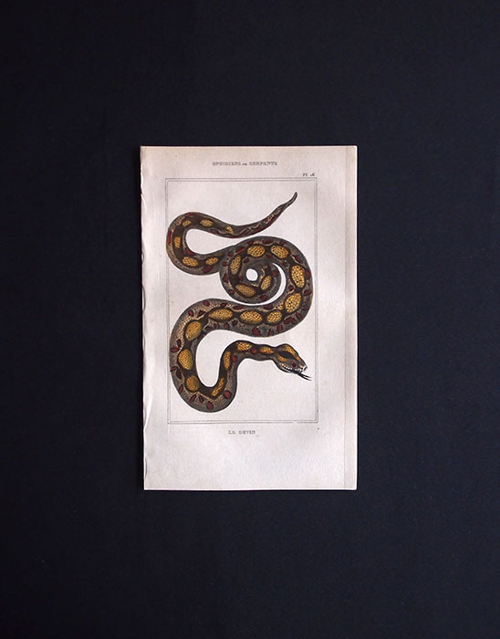 蛇の図版 OPHIDIENS ou SERPENTS