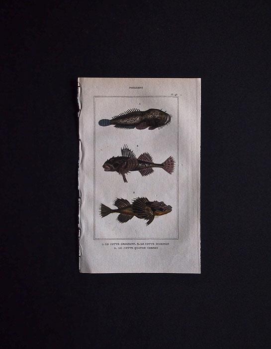 魚類の図版 2
