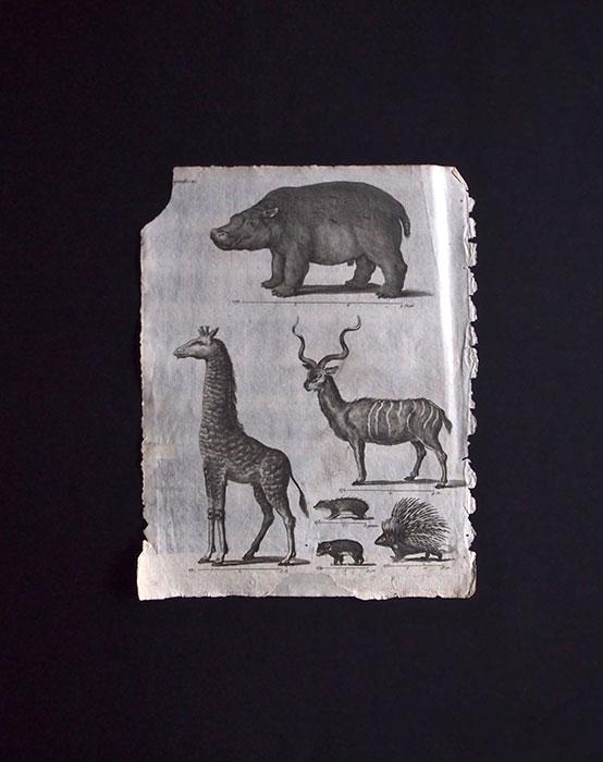 生き物の大きさを示した図版 2
