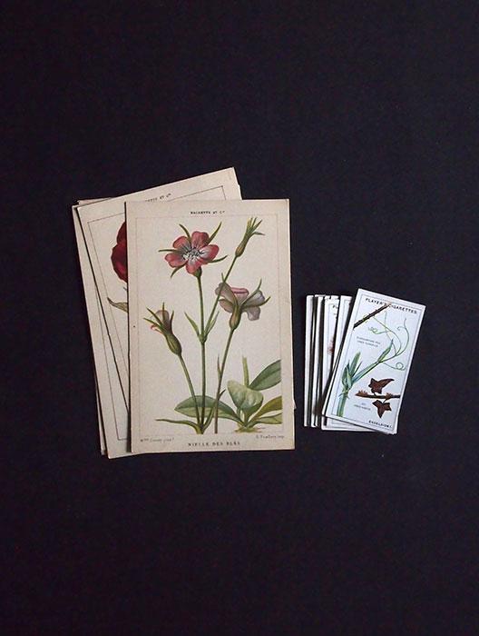 10周年記念サービス品  植物のカード・セット