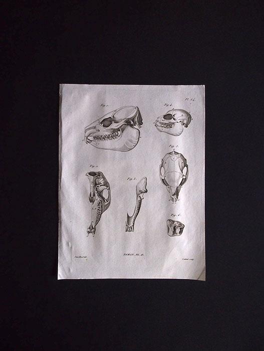 骨の図版 1