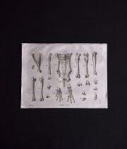 骨の図版 2