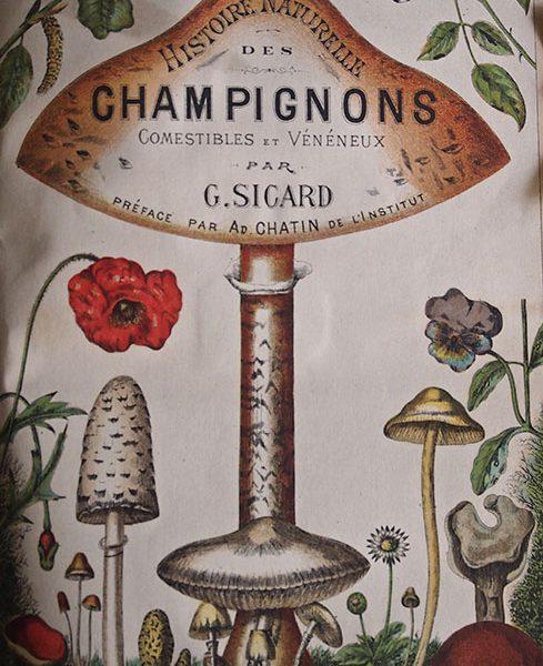 Histoire Naturelle des Champignons