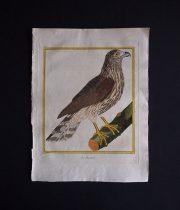 ビュフォンの鳥類史 K  Le Busard