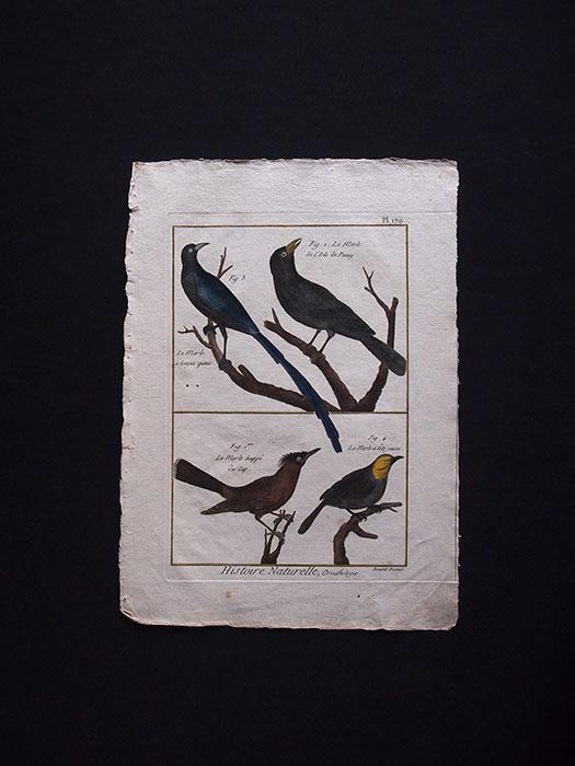 博物図版  Ornithologie 1