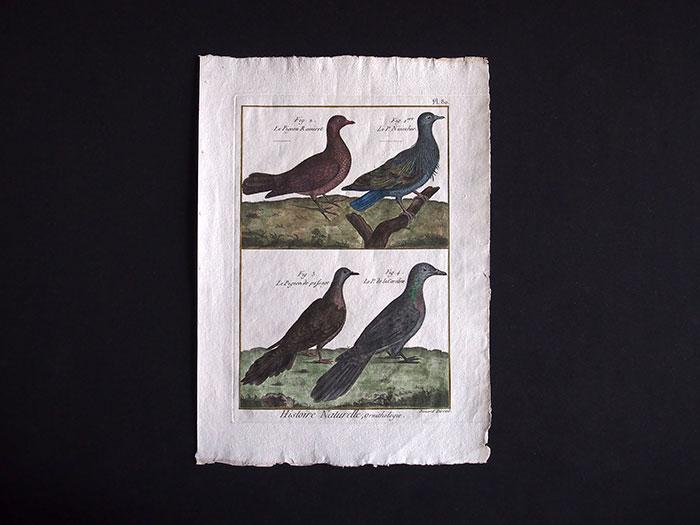 博物図版 Ornithologie 2