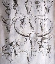 Recherches Sur Les Ossemens Fossiles  Atlas II