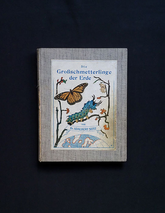 Die Gross-Schmetterlinge des Erde