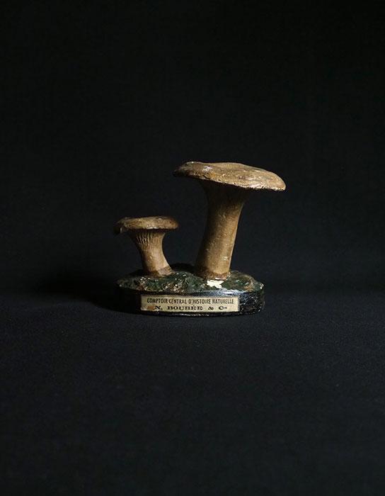 キノコの模型 56 Lactarius torminosus