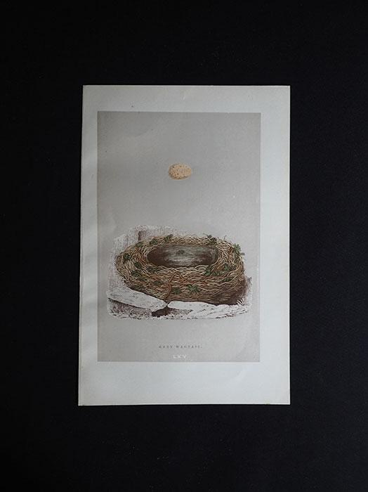 鳥の巣と卵の図版 4