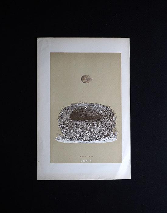 鳥の巣と卵の図版 5