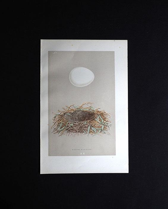鳥の巣と卵の図版 6