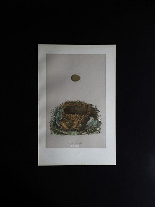 鳥の巣と卵の図版 3