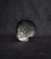 Crâne d'huître perlière 真珠貝の髑髏