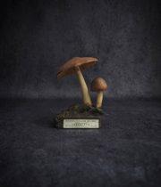 古いキノコの模型 59 Pluteus couleur de cerf