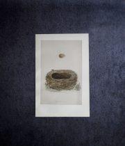 鳥の巣と卵の図版 7