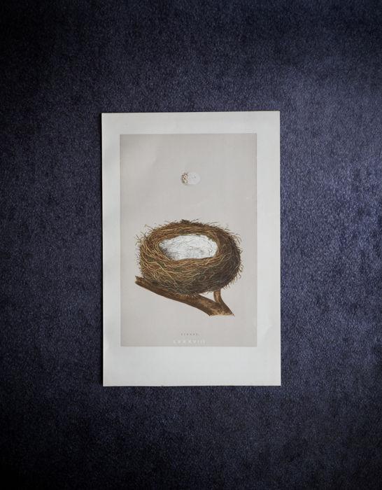 鳥の巣と卵の図版 9