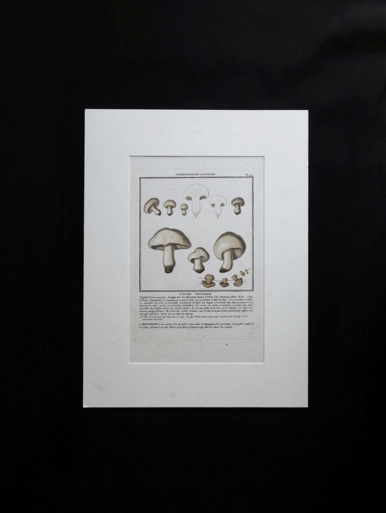 キノコの図版 34 L'AGARIC MOUSSERON