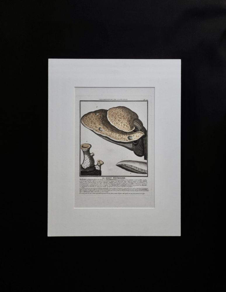 キノコの図版 36 LE BOLET POLYMORPHE